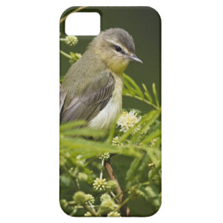Warbling Vireo (Vireo gilvus) foraging on South iPhone 5 Cover