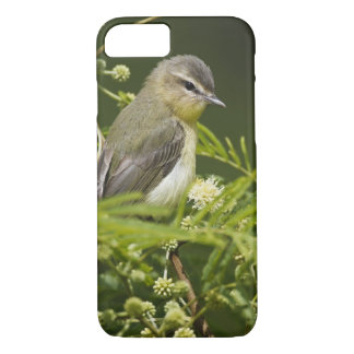 Warbling Vireo (Vireo gilvus) foraging on South iPhone 8/7 Case