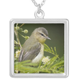 Warbling Vireo (Vireo gilvus) foraging on South Square Pendant Necklace