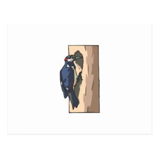 Warder Woodpecker Postcard