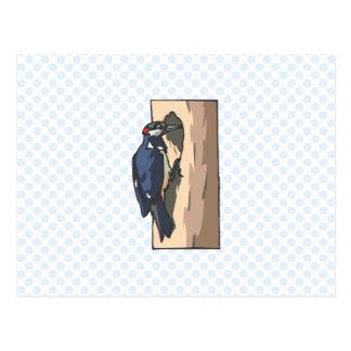 Warder Woodpecker Postcards