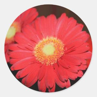 Warm Gerber Daisy Sticker