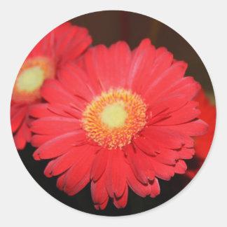 Warm Gerber Daisy Round Sticker