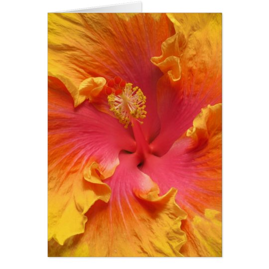 Warm Hibiscus Card