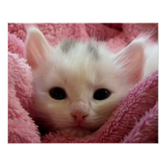 Warm Kitten in a Blanket Poster