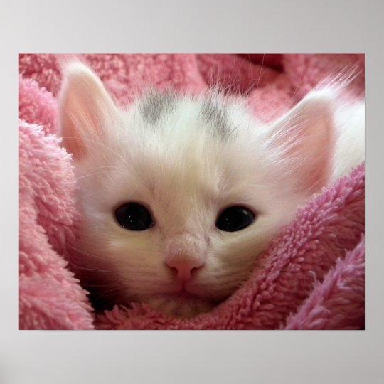 Warm Kitten in a Blanket Poster