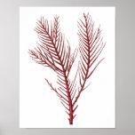 Warm Red Sea Coral no.10 Beach Wall Art Print