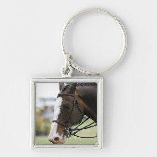 Warmblood Horse Photo  Keychain