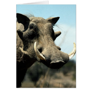 Warthog Close-Up Greeting Card