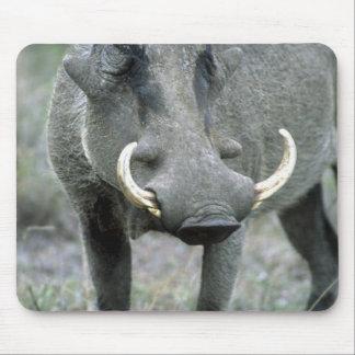 Warthog Phacochoerus africanus) Masai Mara Mouse Pad