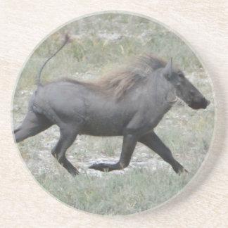Warthog Sandstone Coaster