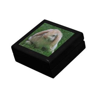 Wascally Wabbit Gift Box