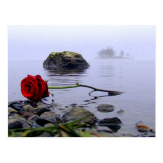 Washed Ashore Red Rose Post Card