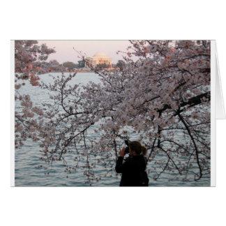 Washington DC Cherry Blossom Cards