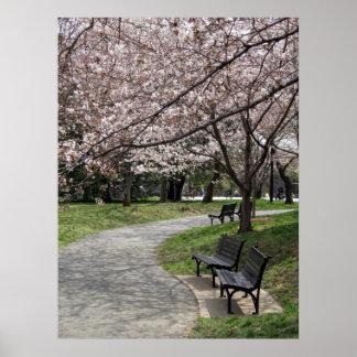 washington dc cherry blossom poster