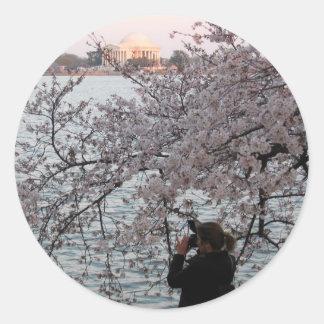 Washington DC Cherry Blossom Round Stickers