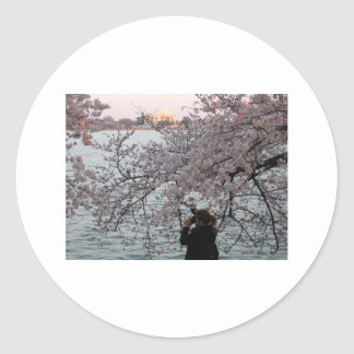 Washington DC Cherry Blossom Stickers