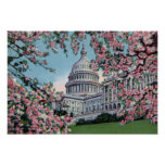 Washington DC Congress Capitol Hill Cherry Blossom Poster