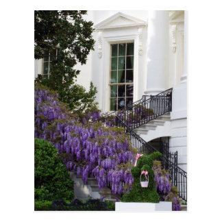 Washington DC White House Wisteria Easter Postcard