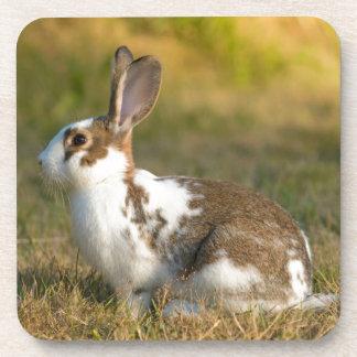Washington, Discovery Park. Adult Rabbit Beverage Coasters