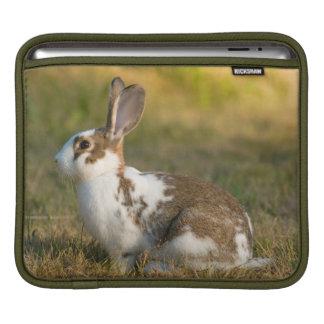 Washington, Discovery Park. Adult Rabbit iPad Sleeves