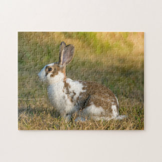 Washington, Discovery Park. Adult Rabbit Jigsaw Puzzle