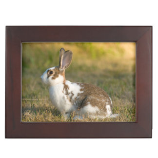 Washington, Discovery Park. Adult Rabbit Keepsake Box