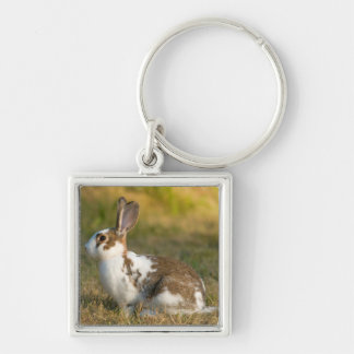Washington, Discovery Park. Adult Rabbit Key Ring