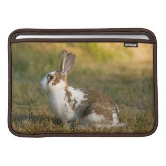 Washington, Discovery Park. Adult Rabbit MacBook Air Sleeves