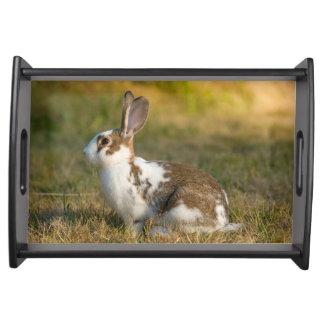 Washington, Discovery Park. Adult Rabbit Serving Tray