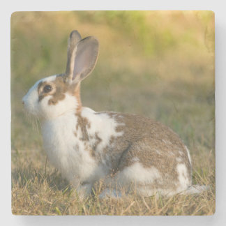 Washington, Discovery Park. Adult Rabbit Stone Coaster