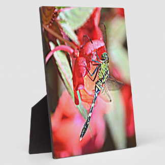 Washington Green Darner Dragonfly Photo Plaques