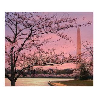 Washington Monument Cherry Blossom Festival Photograph