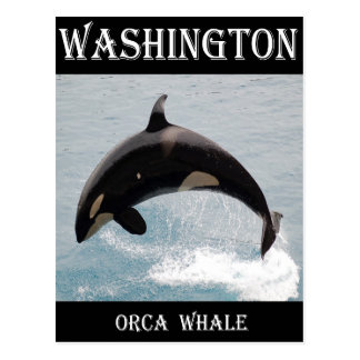 Washington Orca Whale Post Card