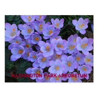 Washington Park Arboretum Postcard