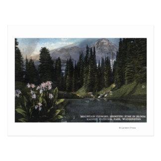 Washington - Rainier National Park, Shooting Sta Postcard