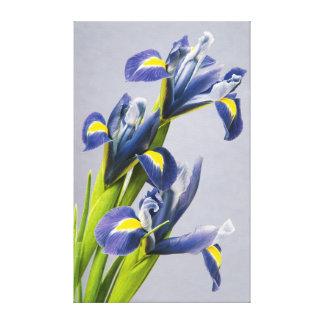 Washington, Redmond, Purple Irises Canvas Print