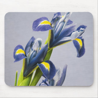 Washington, Redmond, Purple Irises Mouse Mat