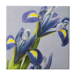 Washington, Redmond, Purple Irises Small Square Tile