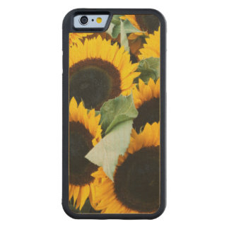 Washington, Seattle, Sunflower for sale pike Carved Maple iPhone 6 Bumper Case