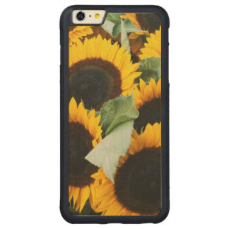 Washington, Seattle, Sunflower for sale pike Carved® Maple iPhone 6 Plus Bumper Case