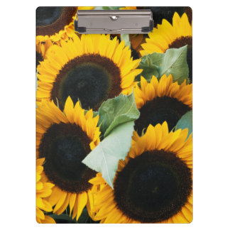 Washington, Seattle, Sunflower for sale pike Clipboard