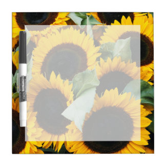 Washington, Seattle, Sunflower for sale pike Dry Erase Board