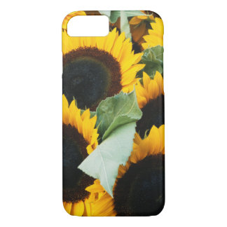 Washington, Seattle, Sunflower for sale pike iPhone 7 Case