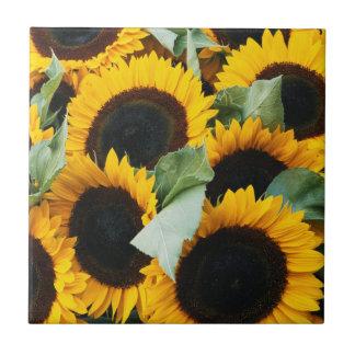 Washington, Seattle, Sunflower for sale pike Tile