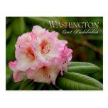Washington State Flower: Coast Rhododendron