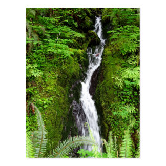 Washington State Postcard: Quinault Rain Forest Postcard