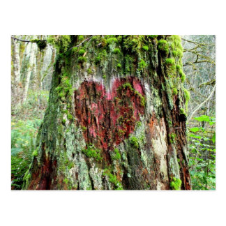Washington State Postcard: Tree of Love Postcard