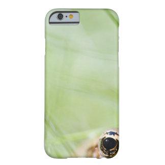 Washington, USA Barely There iPhone 6 Case