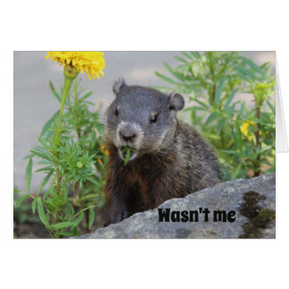 Wasn't Me Ground Hog Card